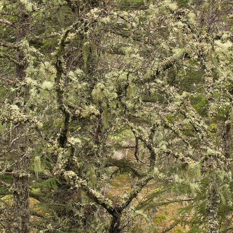 Ted Leeming - The-Lichen-Tree