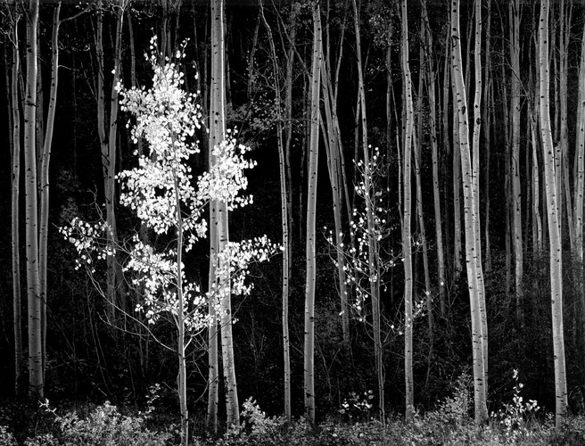 """Ansel Adams, """"Aspens, Northern New Mexico, 1958"""" Just obviously great in every way."""