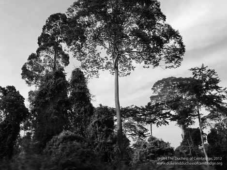 Photo of tall tree above canopy_0