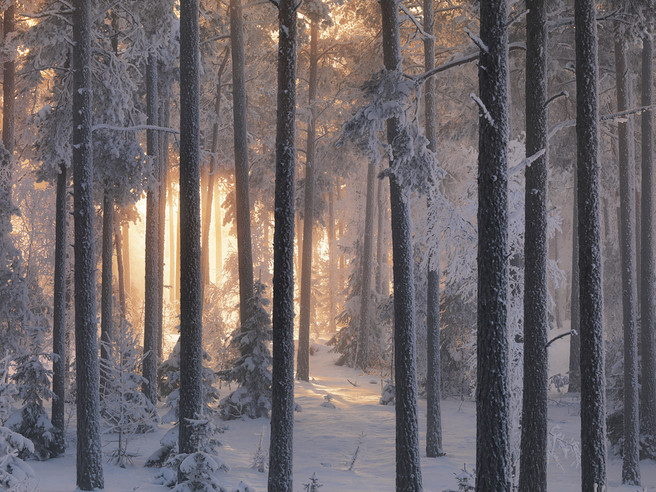 Winter Forest 3