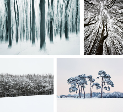Beech Trees in Snow. Prior's Wood. Somerset. UK