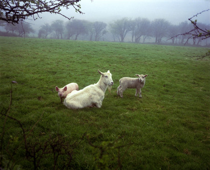 The Pig, the Lamb and the Goat from the series 'The Red River' You can read more about this intriguing image and Southam's thoughts on it on the Guardian's website