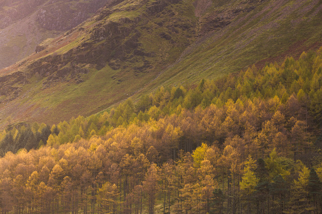 0734_buttery_larches