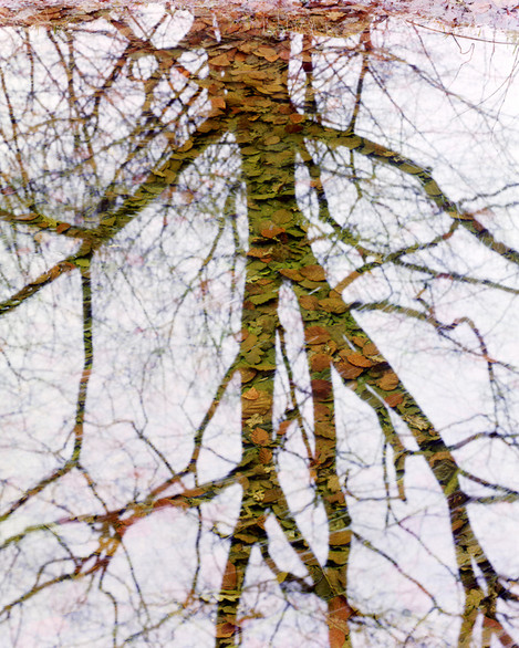 Dave Parry - Reflection in Whin Wood