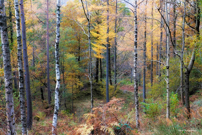 Mixed Woodland above Derwent Water-small