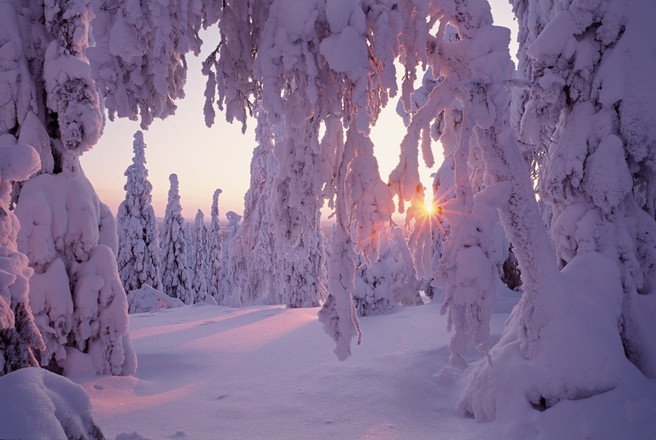 """""""Taiga Forest"""", Northern Finland, February 1994."""