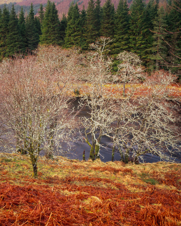 Glen Orchy, 110mm Xl, Velvia 50