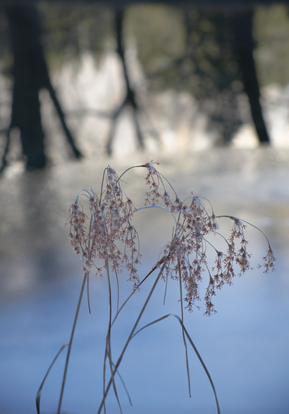 3_Grasses_reflections_Yosemite