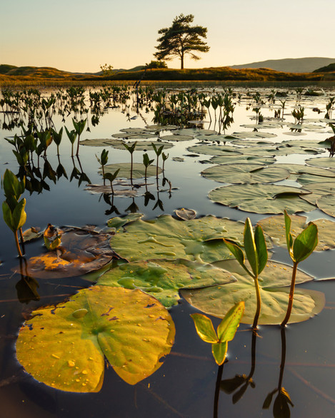 Summer-Evening-At-Kelly_hall_Tarn