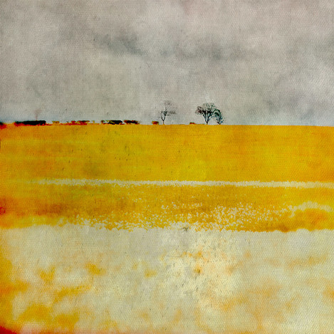 East Lothian Field, Yellow