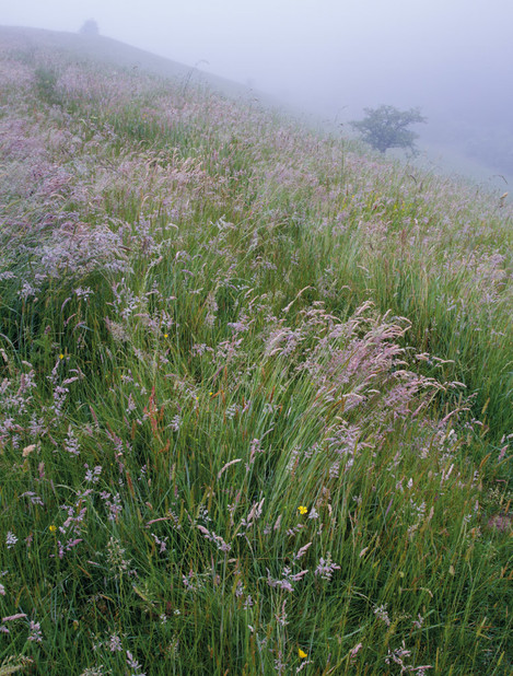 Grasses and mist