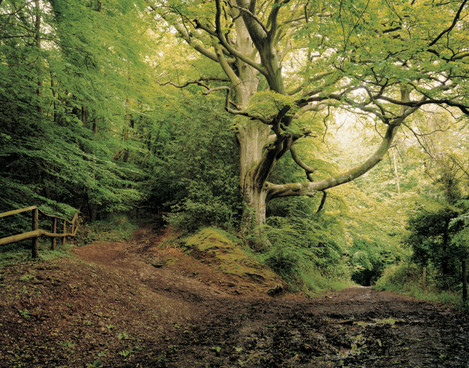 Image 1. Caption: A tranquil woodland scene. Man's gentle interaction with the landscape – an image of the pastoral. Harry Cory Wright: Holly and Beech, Wye Valley Herefordshire