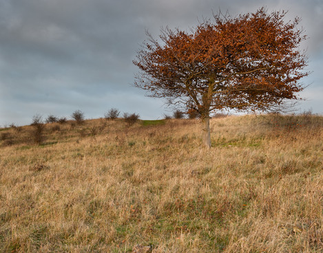 Lone Tree Warden Hill-2875