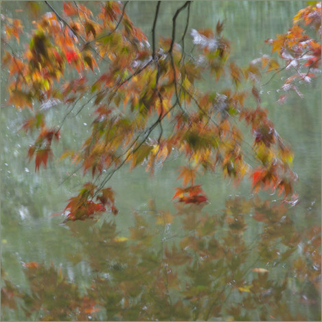 Blowing Autumn Leaves