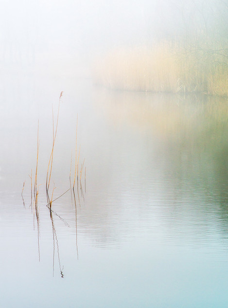 Wake Valley Pond mist