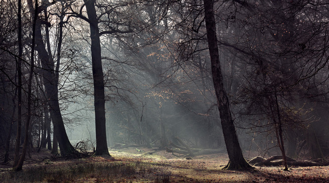 forest_path
