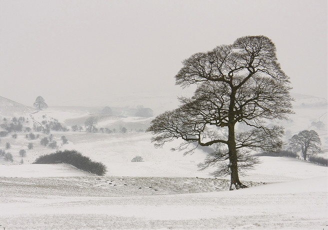 Blizzard (Fields and Trees). The appeal for me of this image is undoubtedly linked to the experience of making it in driving snow yet I have to recognise that its quiet softness may not translate.