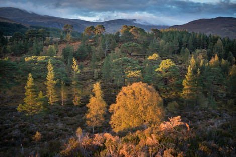 Joe Cornish - Glen Affric