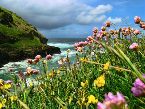 'Thrift and Trefoil' – Tintagel Haven
