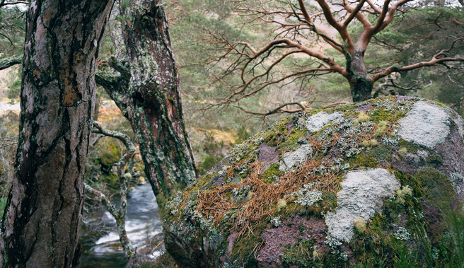 maree-pano-rock-trees