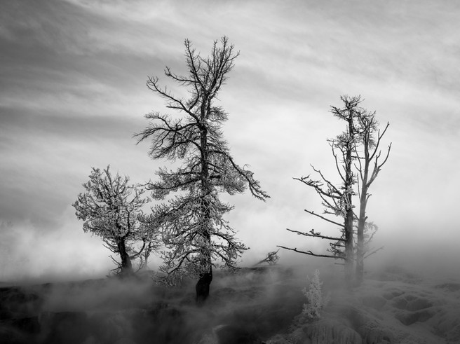 Frost Covered Trees, Mammoth Hot Springs, Yellowstone National Park, Wyoming