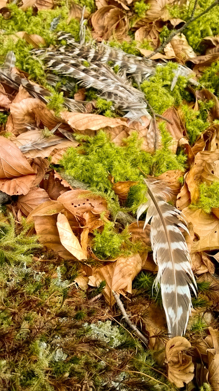 Cuckoo feathers Dendles smartphone (High Pass)) LR-006 (for OnLandscape)