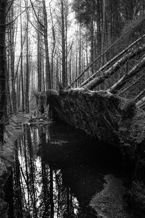 Forestry, Ystradfellte, Brecon Beacons, Wales, UK
