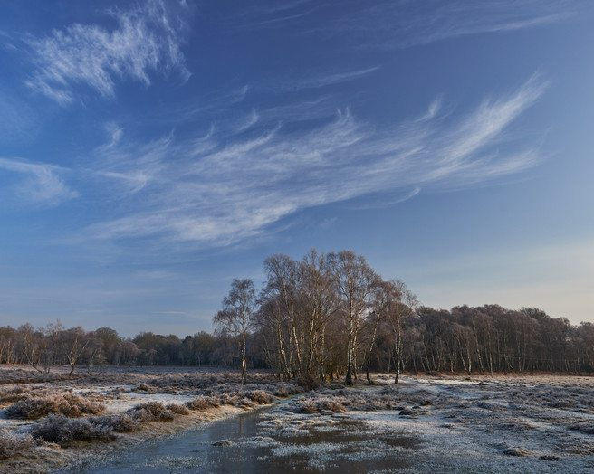 Tolcher Trees - Way below zero, New Forest, Baxter Bradford, website