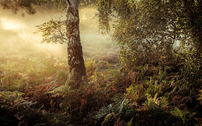 Hushed, Knettishall Heath in Suffolk, Lee Acaster website