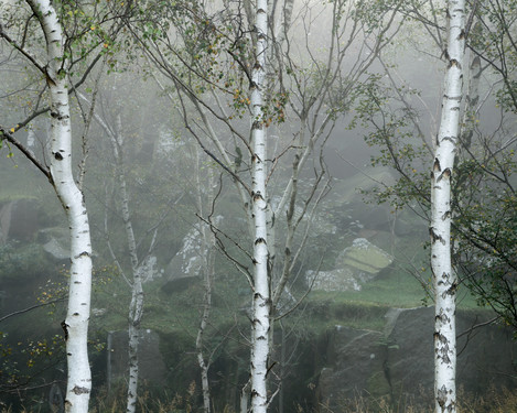 Birches, Rocks, Lichen, Bole Hill, Peak District, Eli Pascall-Willis, website