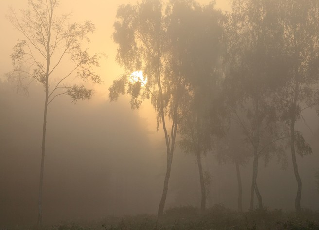 Birches in the Mist at Sunrise, The New Forest, Kevan Brewer, website