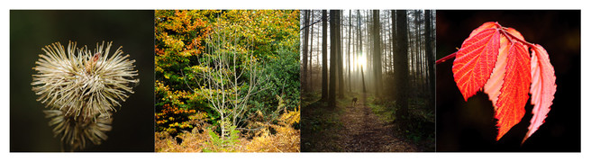 dalby-forest-montage