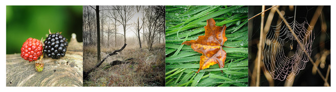 mists-and-mellow-fruitfulness-montage