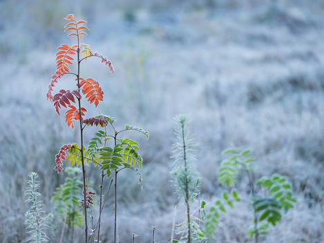 First Frost, Lower Glen Affric, Scottish Highlands, Nick McLaren, Website