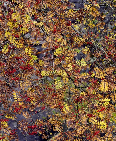 Autumn Jewels, Glyn Rhonwy, Richard Childs, website