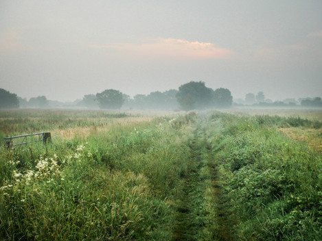 Early morning on the Somerset Levels