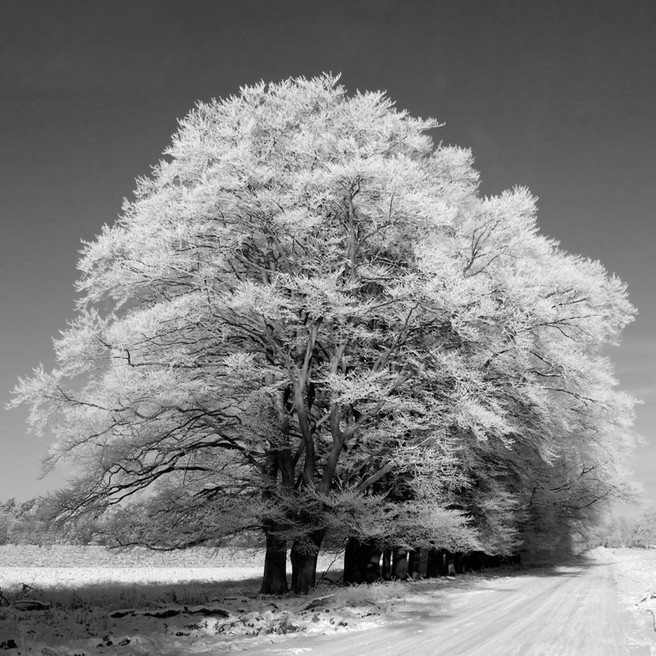 hoar frost tree road 5127