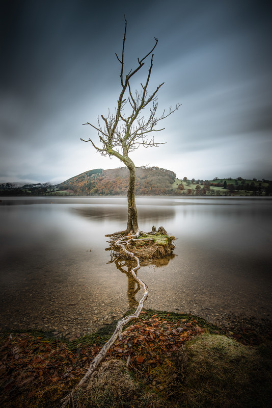 Survival: I saw this tree and the single root stretching out to the shore and immediately thought the tree was hanging on for survival.