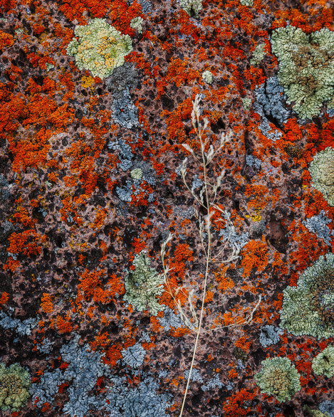 Lichen Moon - Abstraction in Photography Guy Tal
