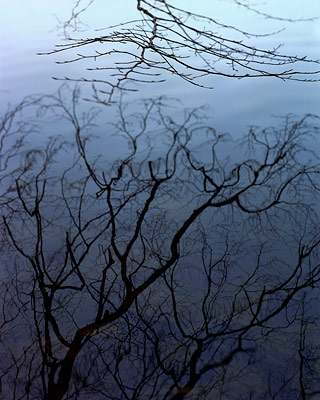 Reflected Branches