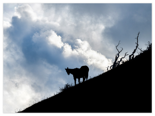 <strong>A Dark Horse</strong> was my companion during a picnic lunch on a remote hiking trail as a storm rolled in, reminding me of the value of friendship (even for loners) in times of trouble.
