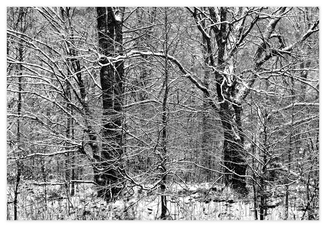 <strong>Entanglement</strong> is my answer to a visual puzzle in the forest that challenged me – an organised person – to make order from the chaos of sticks.