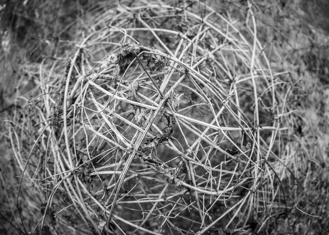 Interwoven ball of vines, supporting itself.